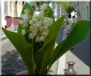 Bannière bouquet muguet